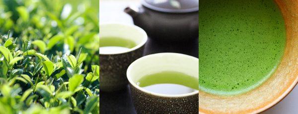 おやいづ製茶の静岡茶